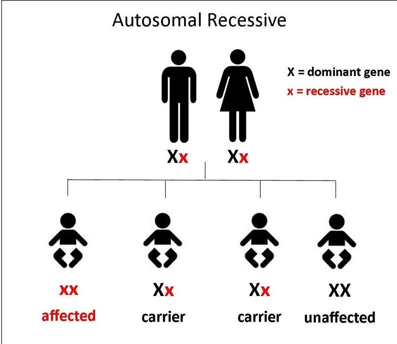autosomal-recessive